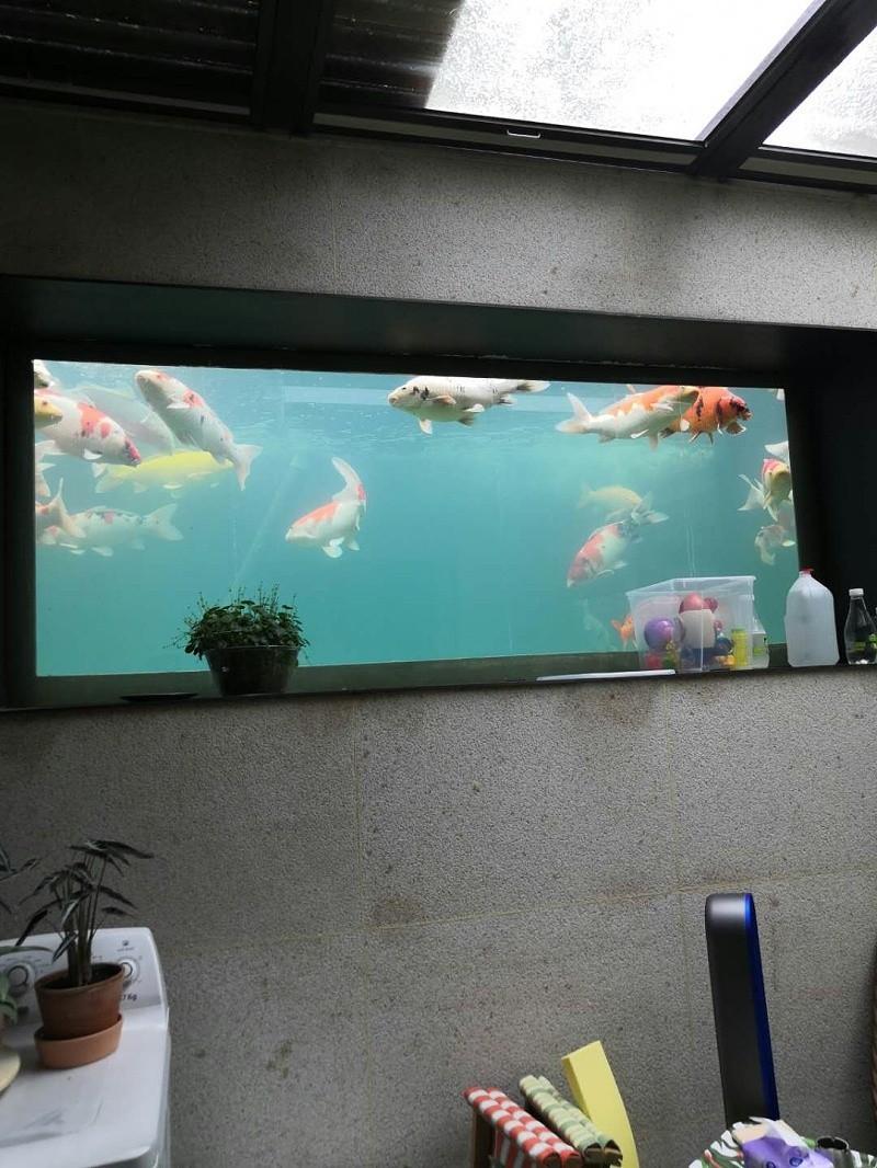别墅地下室景观鱼池维修后